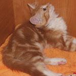 Griselda 12 Wochen alt