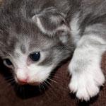 Hieronymus 2 Wochen alt