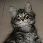 Humphrey 10 Wochen alt