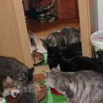 Galathea 13 Wochen alt mit Hieronymus, Yasmine, Diana und Trulte