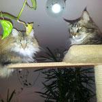 Penelope 26 Monate alt mit Coonie Galileo 5 Jahre und 3 Monate alt