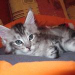 Mephisto 8 Wochen alt