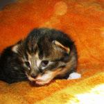 Zita 2 Wochen alt