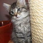 Peppone 8 Wochen alt