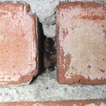 Wasserfledermaus in einer engen Ziegelspalte in einem Keller