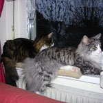Figaro und Flint 1 Jahr alt