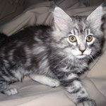 Fidelio 10 Wochen alt