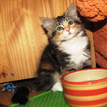 Yasmine 10 Wochen alt