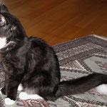 Orion 6 Monate alt