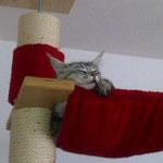 Mephisto 7 Monate alt
