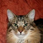 Peppone 8 Monate alt