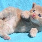 Pierroth 3 Wochen alt