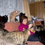 Peppone 1 Jahr und 10 Monate alt mit Pierroth, Cosmo, Easy (Coonie), Cindy (Hauskatze) und Eurasierhündin Lea