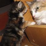Olympia  3 Jahre und 5 Monate alt mit Töchterchen Yasmine 4 Wochen alt