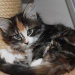 Bellaluna 8 Wochen alt