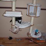 Whitney 6 Monate alt mit Xerxes 3,5 Monate alt