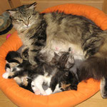 Daisy 6 Jahre  und 4 Monate alt mit Söhnchen Mephisto 30 Tage alt sowie Norwegerchen Leticia und Liberty 38 Tage alt