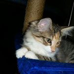 Bastet 4 Monate alt
