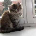 Penelope 10 Wochen alt