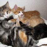 Olympia  1 Jahr und 11 Monate alt mit ihren Söhnen Tomcat, Troll und Tristan 9 Wochen alr