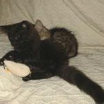 Bonnie 12 Wochen alt