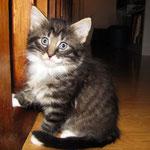 Verdi 6 Wochen alt