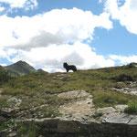 Urlaub in der Ramsau beim Dachstein