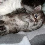Fidelio 4 Wochen alt