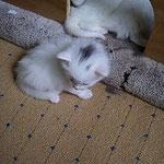 Noshi 8 Wochen alt