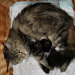 Daisy 4 Jahre  und 7 Monate alt mit ihren I-Babies 1 Tag alt