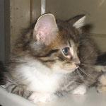 Aglaia 6 Wochen alt