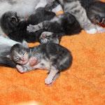 Helena mit Brüdern 1 Woche alt