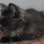 Galathea 11 Wochen alt