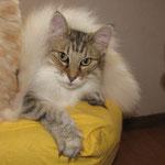 Amelie 10 Jahre und 2 Monate alt und Schwanz von Tristan