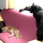 Easy 3 Jahre und 9 Monate alt   Mit Norwegerkater Pierroth, Hauskatze Cindy aund Eurasierhündin Lea