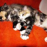 Olympia 8 Monate alt  mit Froya