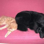 Pierroth 9 Monate alt mit unserer Eurasierhündin Lea
