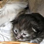 Humphrey 2 Wochen alt
