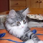 Figaro 4 Monate alt