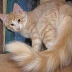 Tristan 16 Wochen alt