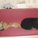 Pierroth 6,5 Monate alt mit Amelie und Eurasierhündin Lea