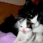 Dime 2 Jahre und 10 Monate alt mit Töchterchen Cheyenne 2 Wochen alt