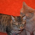 Peppone 2 Jahre und 3 Monate alt mit Pierroth