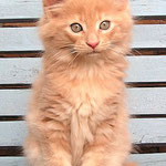 Pierroth 9 Wochen alt