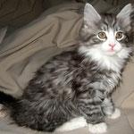Figaro 10 Wochen alt
