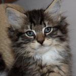Caruso 8 Wochen alt