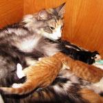 Olympia  1 Jahr und 9 Monate alt mit ihren T-Babies 1 Tag alt