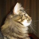 Cosmo 8 Monate alt