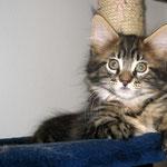 Dorian 10 Wochen alt