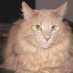 Pierroth 8,5 Jahre  alt